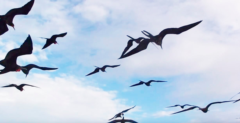Полёт на д морем фрегатов великолепных