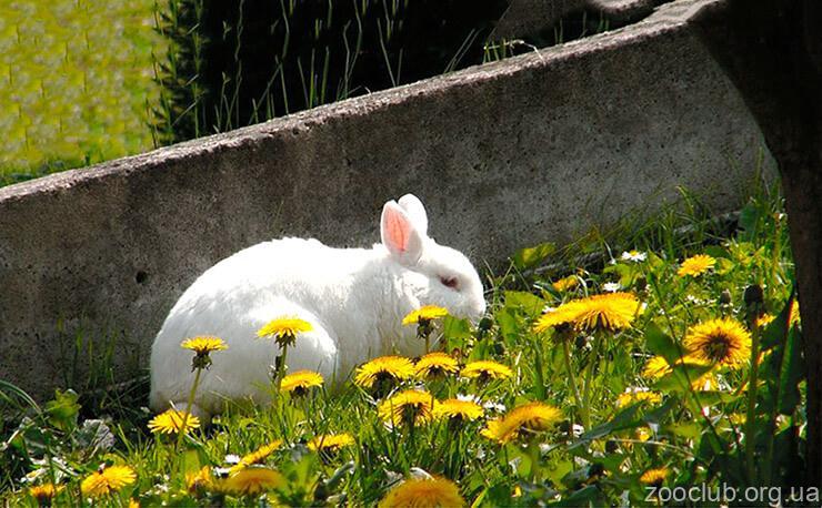 Фото кроликов домашних