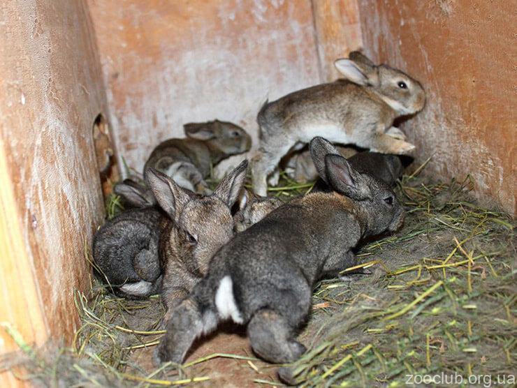 Кролики домашние фото
