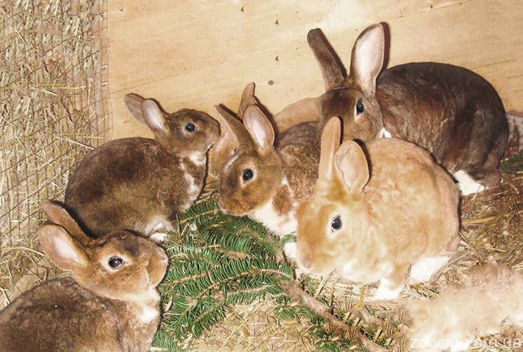 Картинка с домашним кроликами
