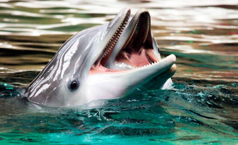 Дельфин афалина фото
