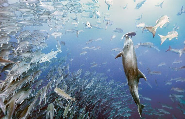 Рыбалка дельфина афалина