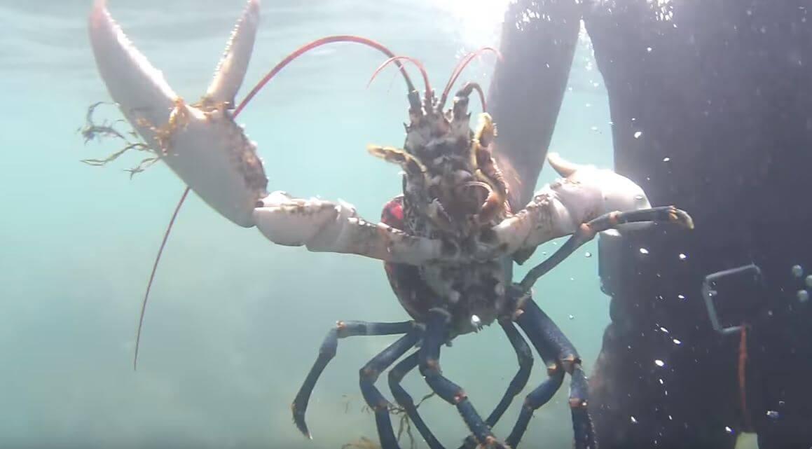 Ловля омара европейского