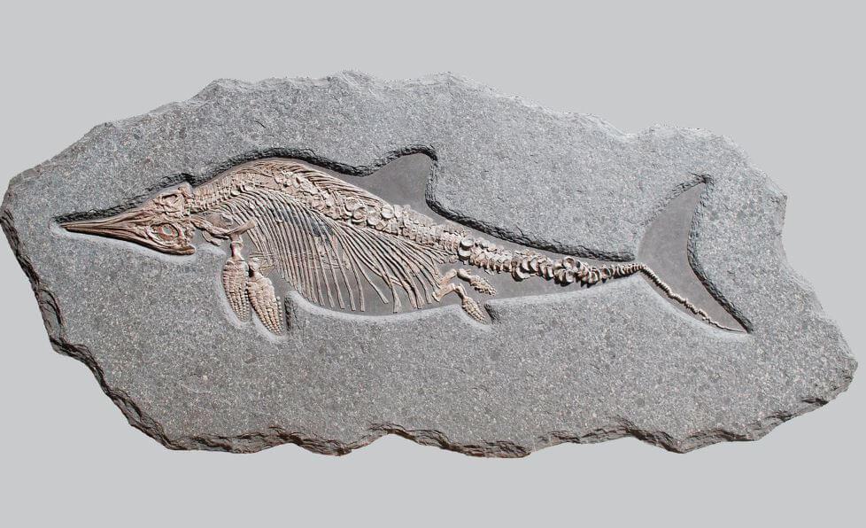 Отпечаток ихтиозавра на камне