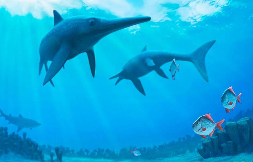 Ichthyosaurus communis