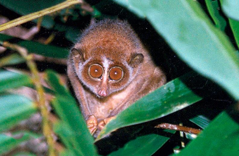 Цейлонский лори в листьях дерева