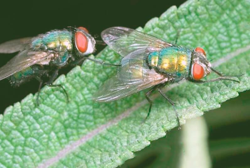 Картинка с мухами домашними