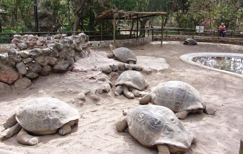 слоновые черепахи в национальном парке