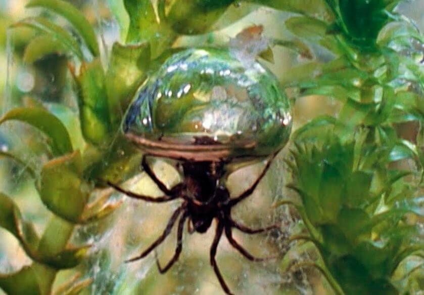 vodyanoy pauk Водяной паук