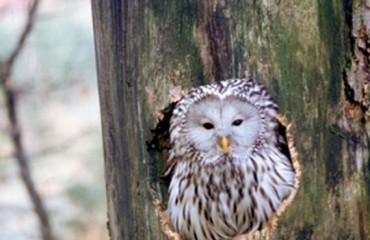 Репортаж из гнезда