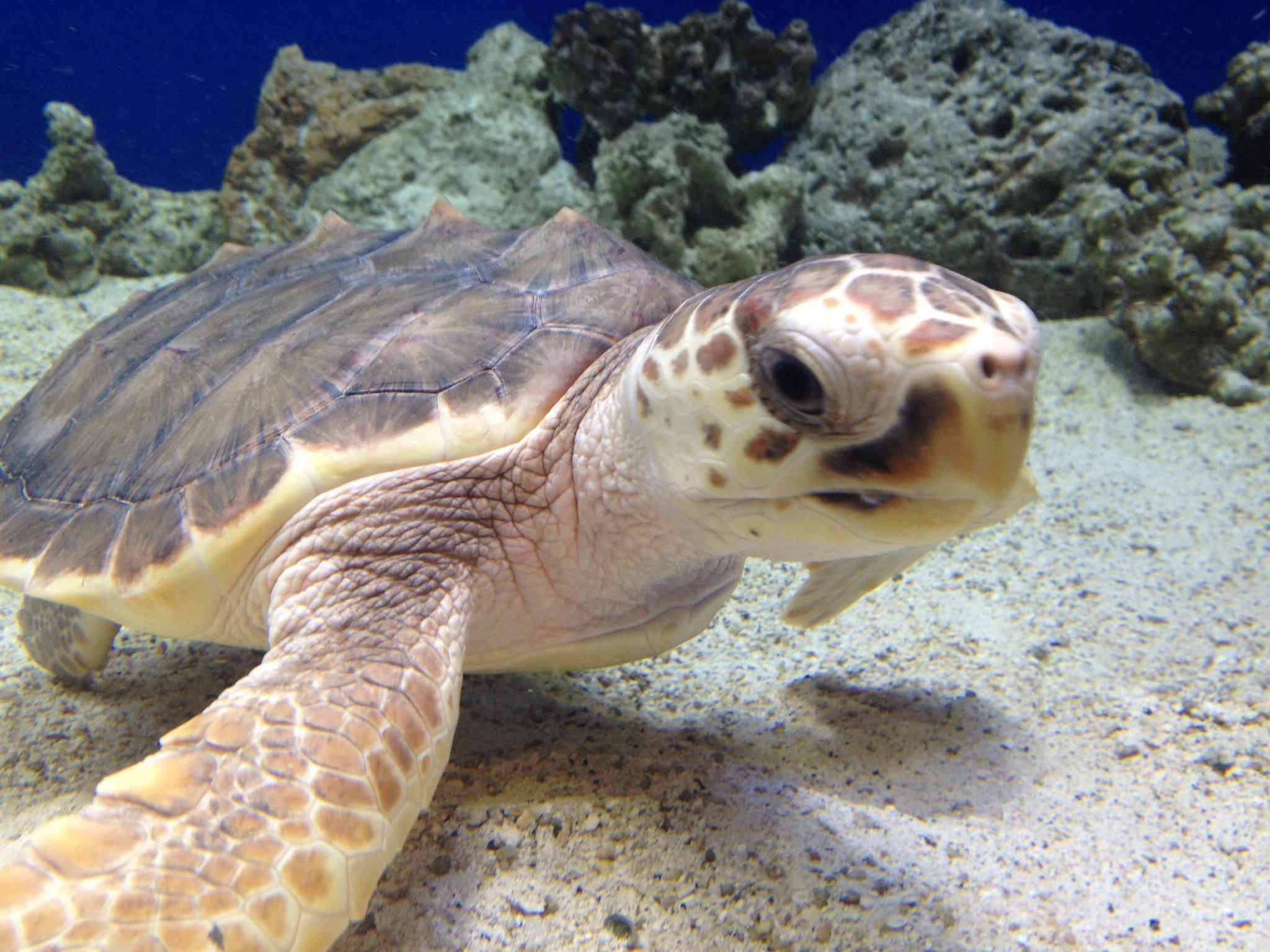 3331 Раскрыта тайна морских черепах