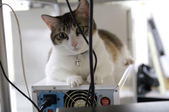 82 Кошки стали офисным планктоном