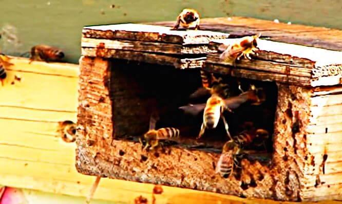 Улей медоносных пчел