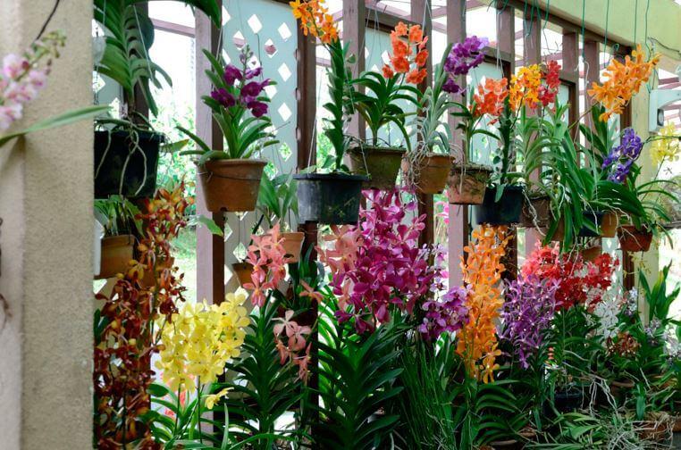 Фото орхидей на окне