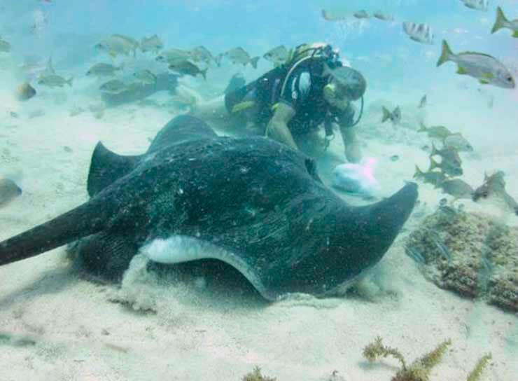 Аквалангист с морским котом