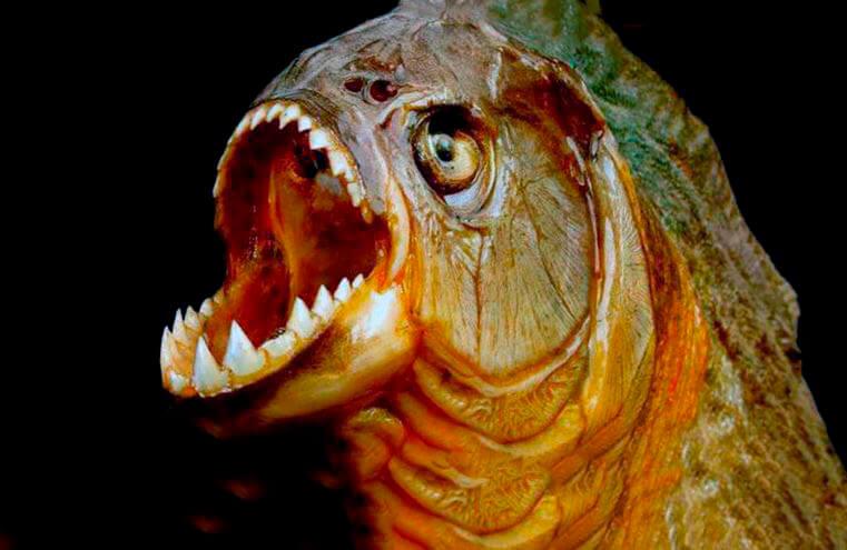 Зубы пираньи обыкновенной
