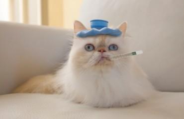 Ленточные черви у кошек