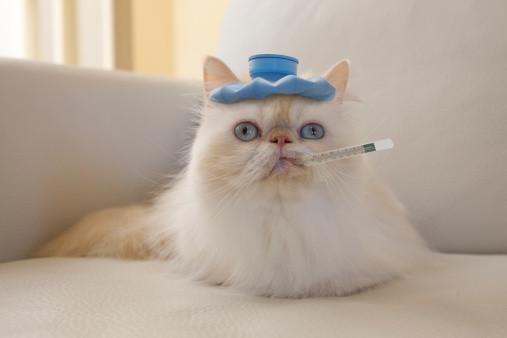 1111 Ленточные черви у кошек