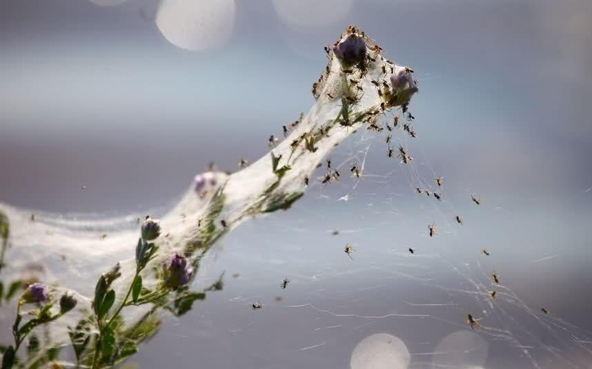 Pautinka 2 Дождь из пауков