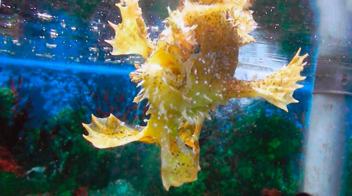 Аквариум с клоуном морским