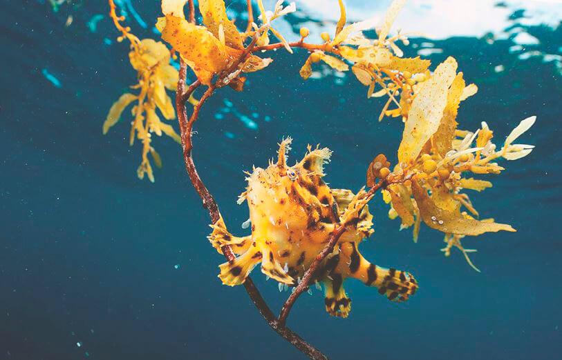 Клоун морской среди растений