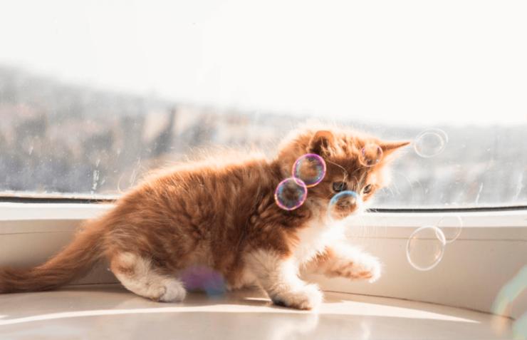 Фото припадок эпилепсии у кошки
