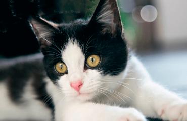 Что вызывает у кошки припадок эпилепсии