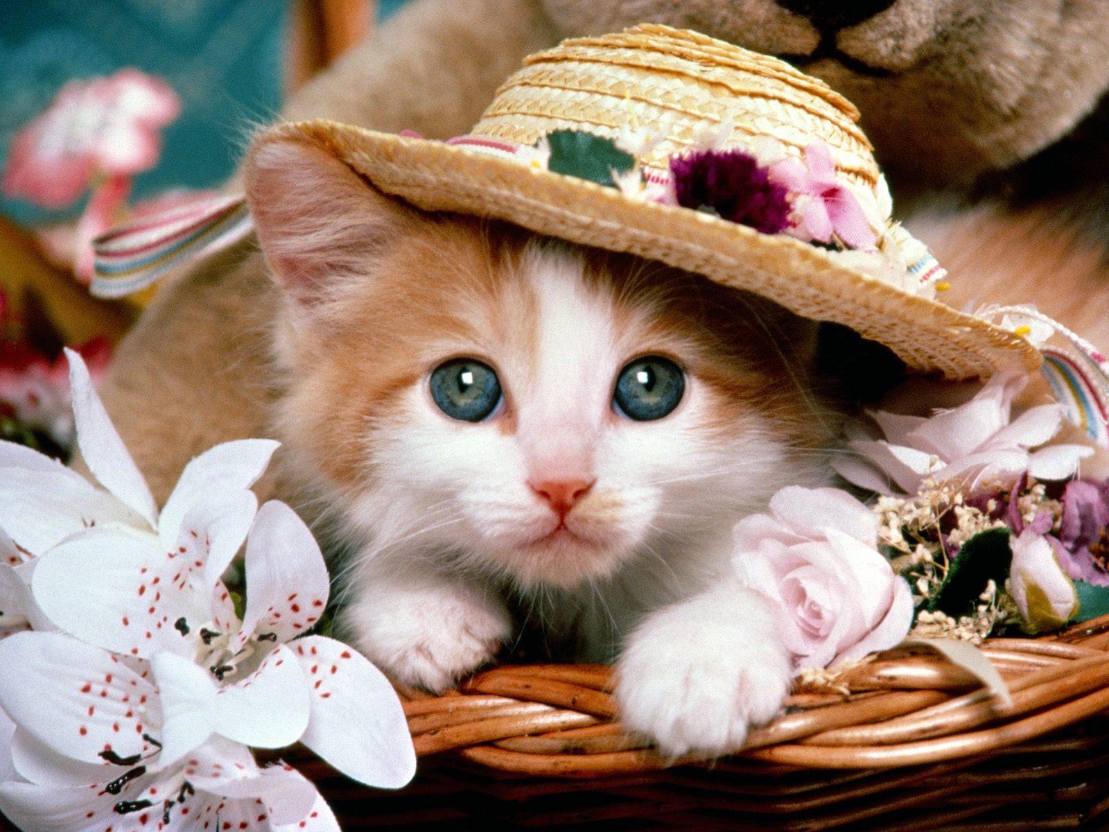 1112 Что коты думают о своих хозяевах