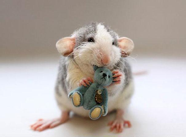 153 Бескорыстные крысы