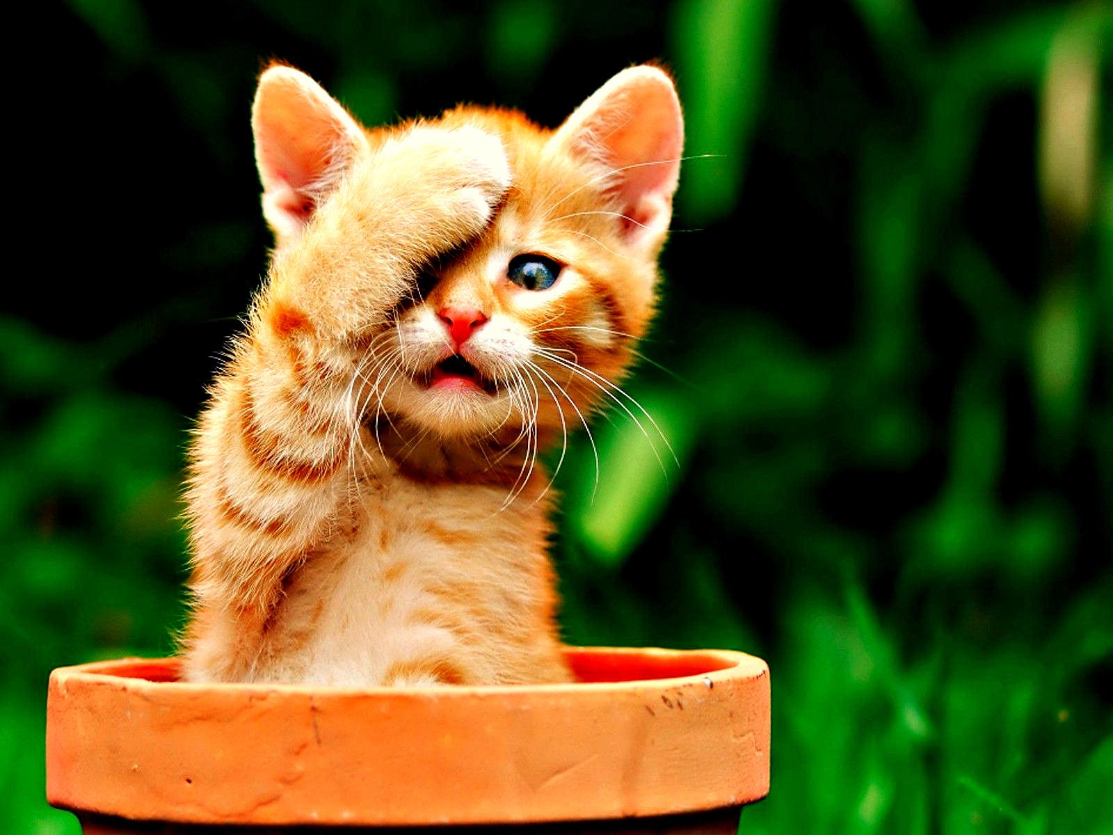 2223 Что коты думают о своих хозяевах