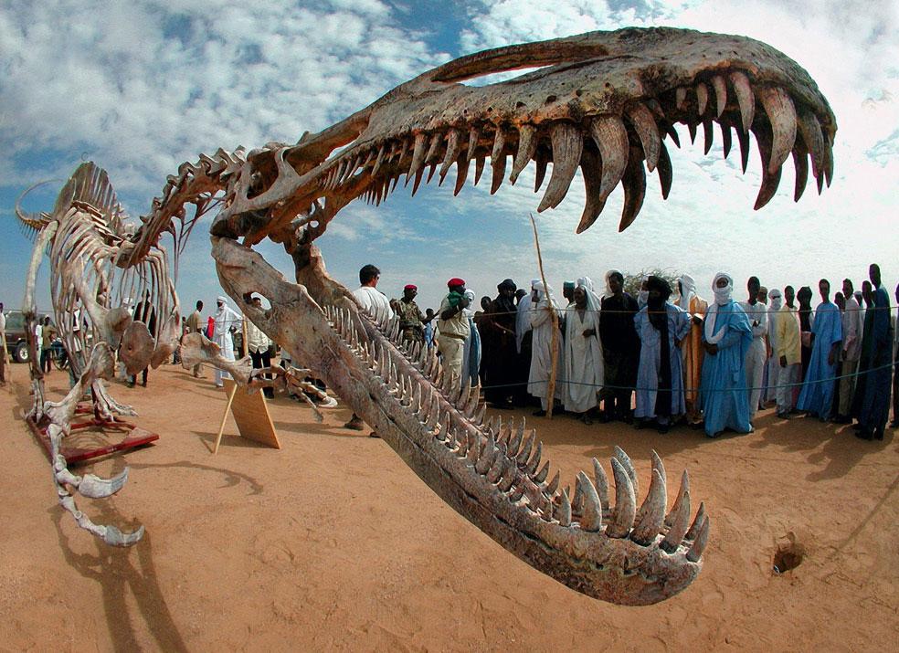 3331 Найдены сохранившиеся клеточные структуры динозавров
