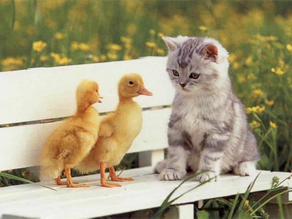 3332 Что коты думают о своих хозяевах
