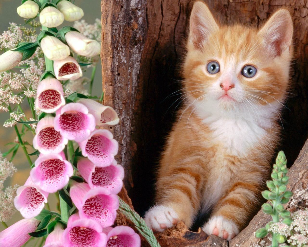 4441 Что коты думают о своих хозяевах