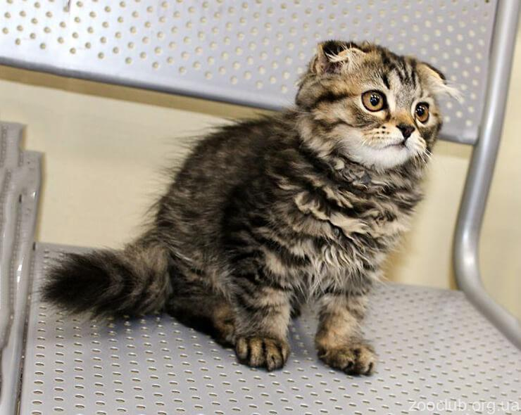 Фото одинокой кошки