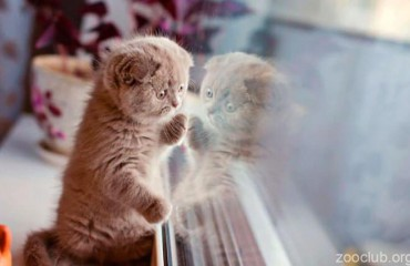 Одиночество кошек