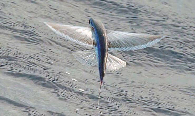 Длиннокрыл вилохвостый завис над морем