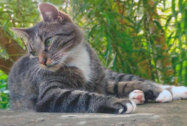 Дикий кот фот