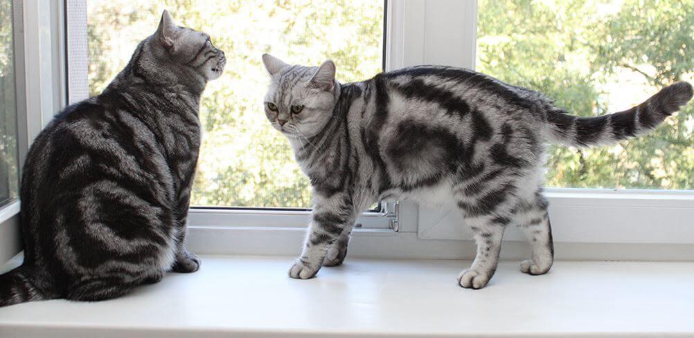 Спасение кошки от одиночества