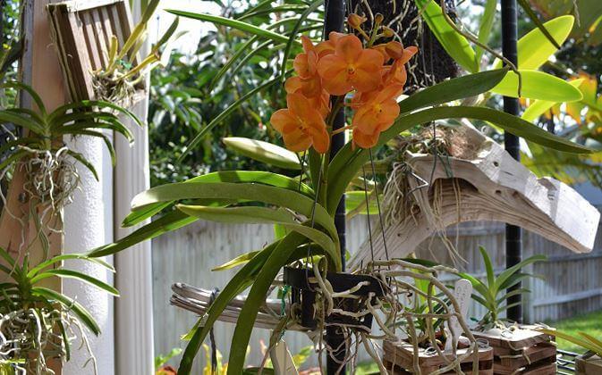 Растение на коряге