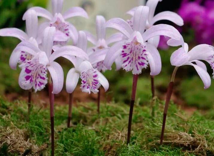 Нежные цветы орхидеи