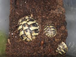 1414 Содержание балканской черепахи в террариуме