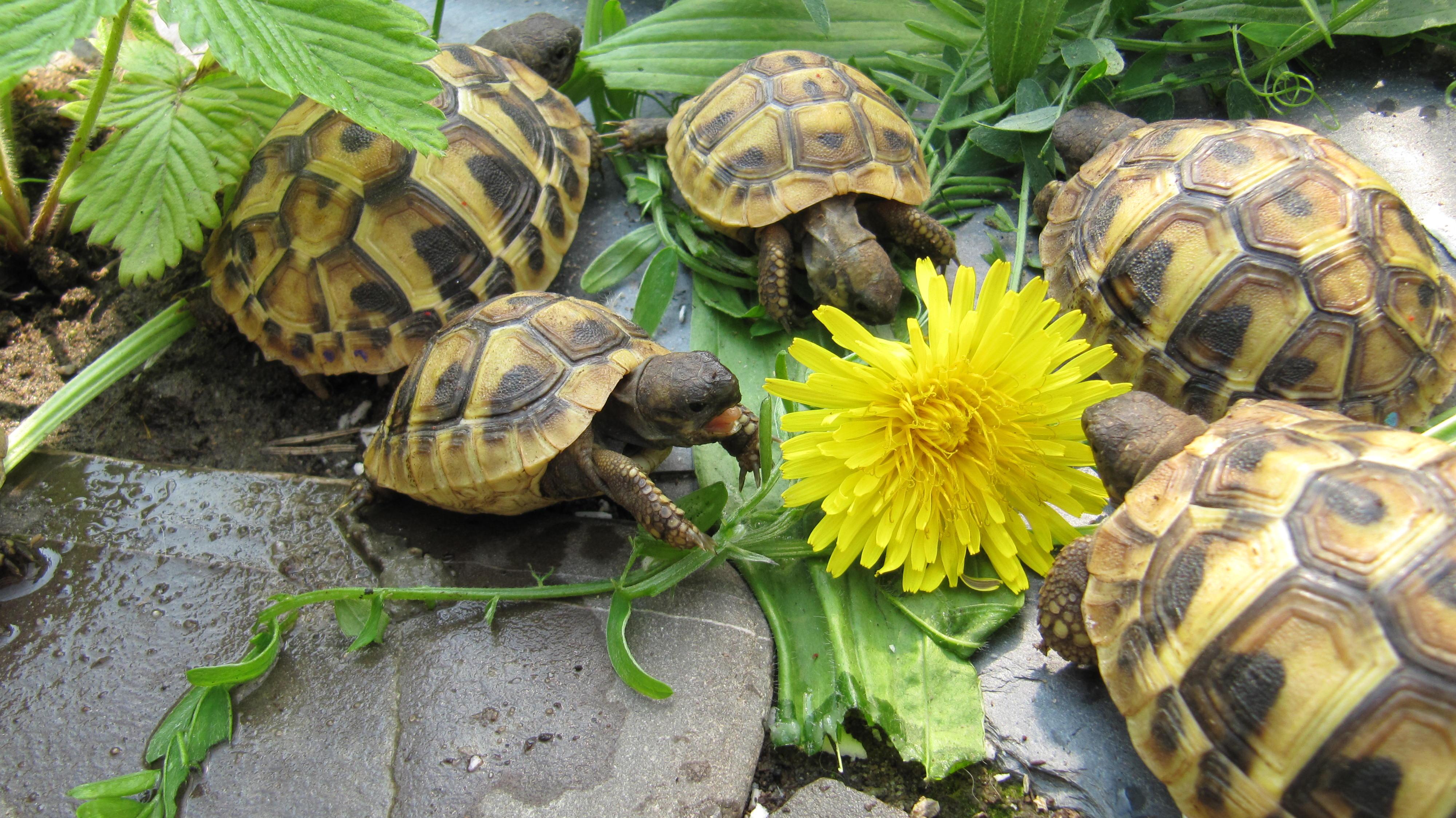 1415 Содержание балканской черепахи в террариуме