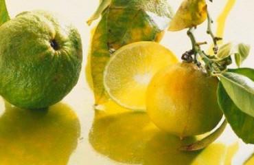 Как выращивать бергамот в домашних условиях