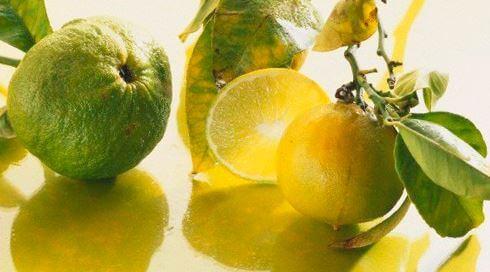 Citrus bergamia небольшая веточка