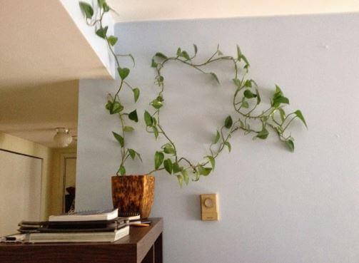 Подходящее место для растения