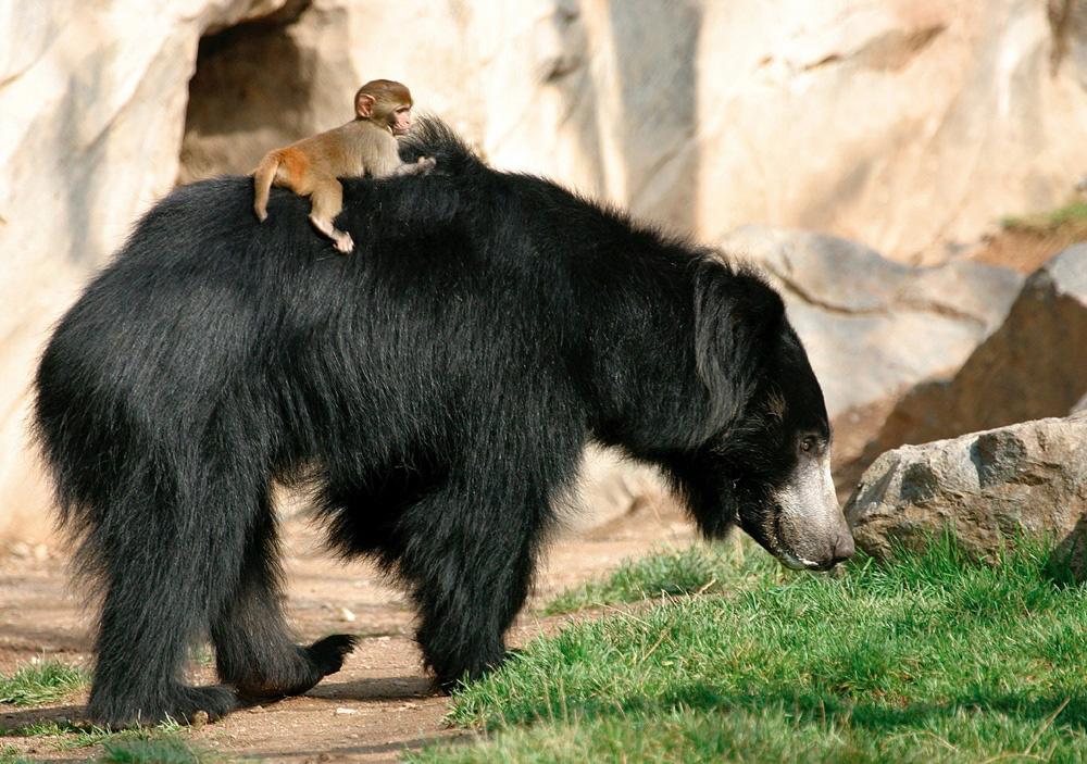 m315 Медведь губач