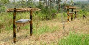 VSPT Queen Elizabeth Beehive Fence4 300x153 Слоны и пчелы