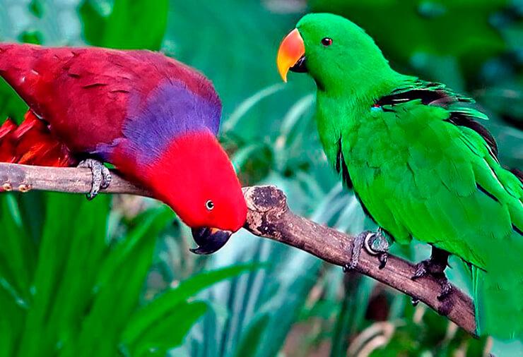 Благородный попугай фото
