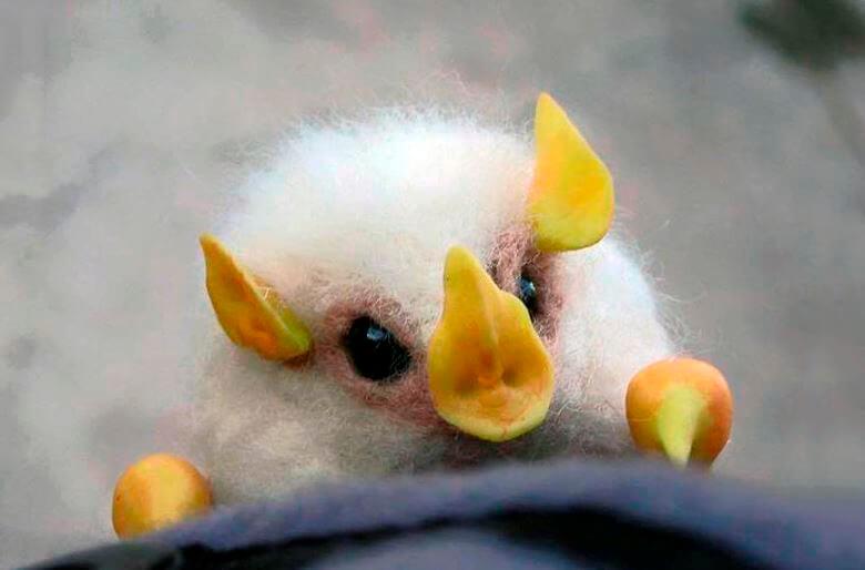 Белая летучая мышь фото