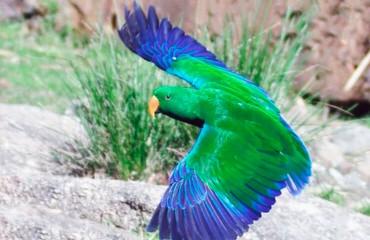 Благородный попугай